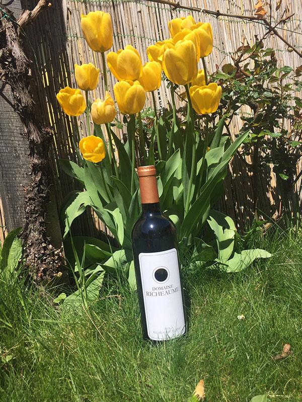 Wein des Monats Juni